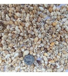 Mini Deniz Kabuğu 100 gr.